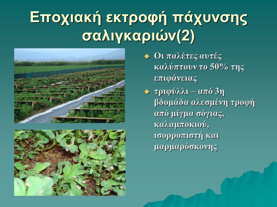 Εποχιακή εκτροφή πάχυνσης σαλιγκαριών(2)
