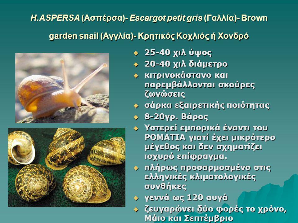 Η.ASPERSA (Ασπέρσα)- Escargot petit gris (Γαλλία)- Brown garden snail (Αγγλία)- Κρητικός Κοχλιός ή Χονδρό