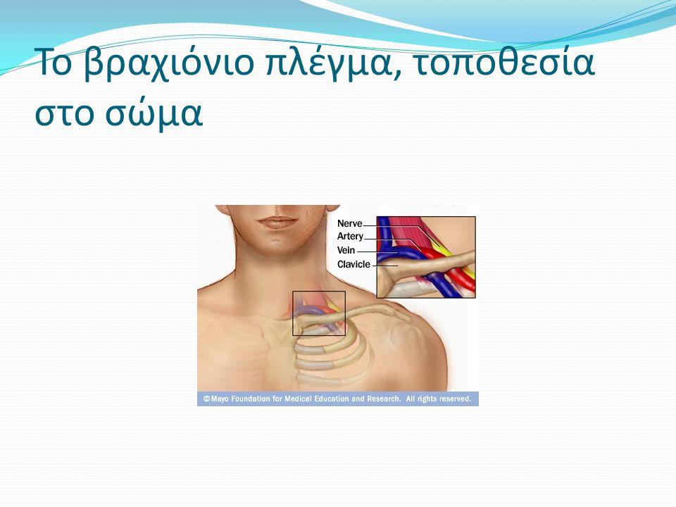 Το βραχιόνιο πλέγμα, τοποθεσία στο σώμα