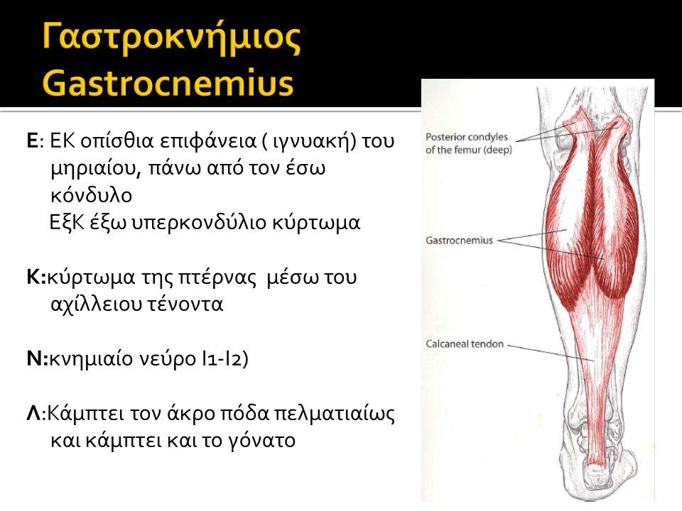 Γαστροκνήμιος Gastrocnemius
