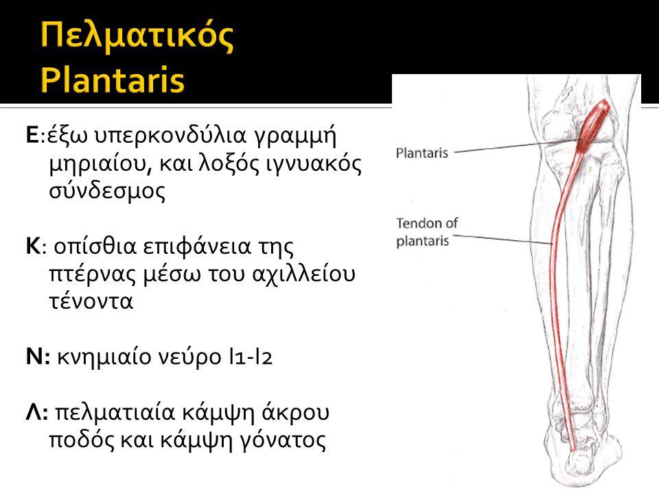 Πελματικός Plantaris