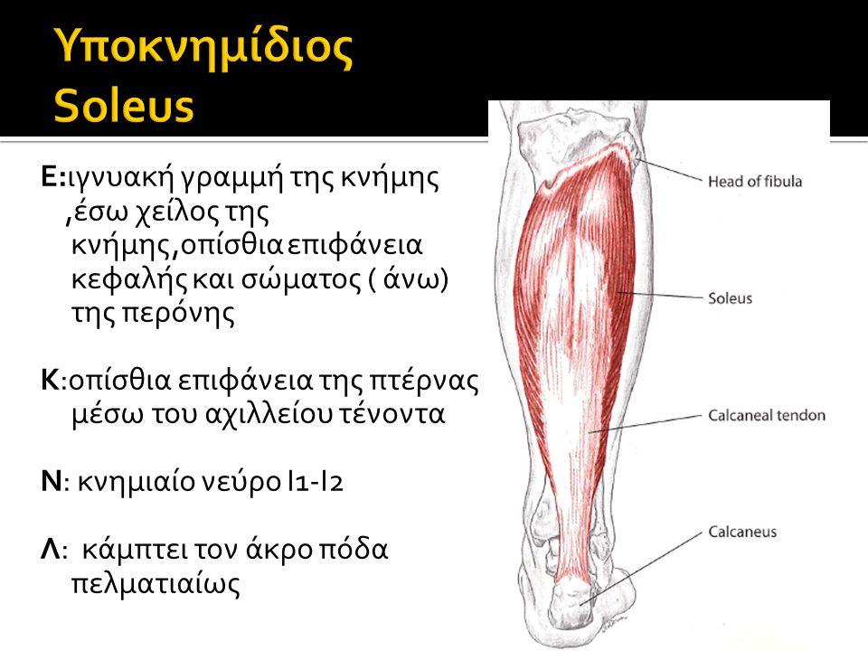 Υποκνημίδιος Soleus