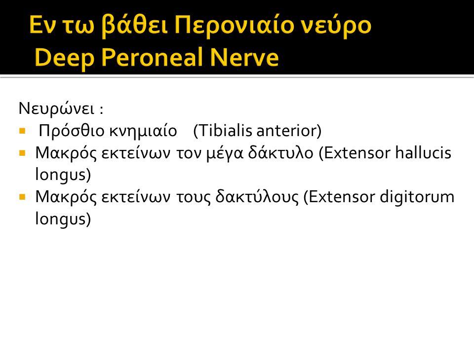 Εν τω βάθει Περονιαίο νεύρο Deep Peroneal Nerve
