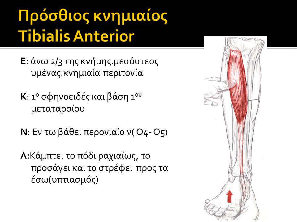 Πρόσθιος κνημιαίος Tibialis Anterior