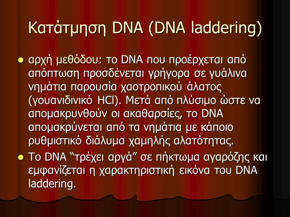 Κατάτμηση DNA (DNA laddering)