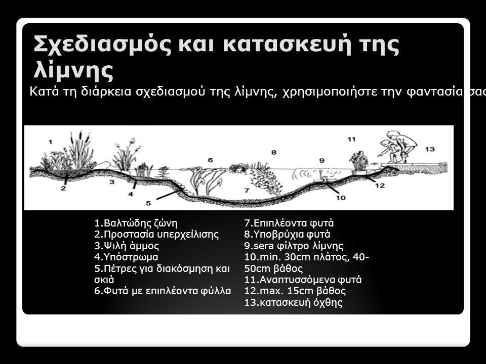 Σχεδιασμός και κατασκευή της λίμνης