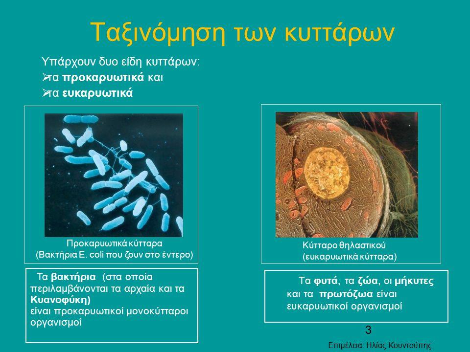 Ταξινόμηση των κυττάρων