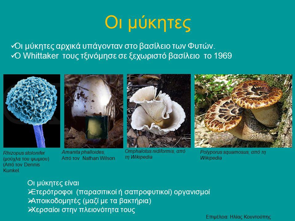 Οι μύκητες Οι μύκητες αρχικά υπάγονταν στο βασίλειο των Φυτών.