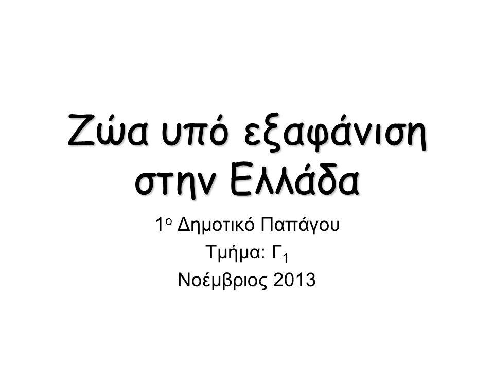 Zώα υπό εξαφάνιση στην Ελλάδα