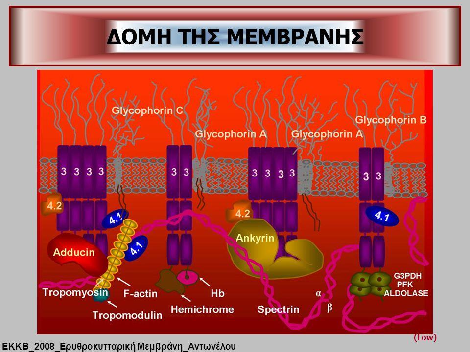 ΔΟΜΗ ΤΗΣ ΜΕΜΒΡΑΝΗΣ (Low) ΕΚΚΒ_2008_Ερυθροκυτταρική Μεμβράνη_Αντωνέλου