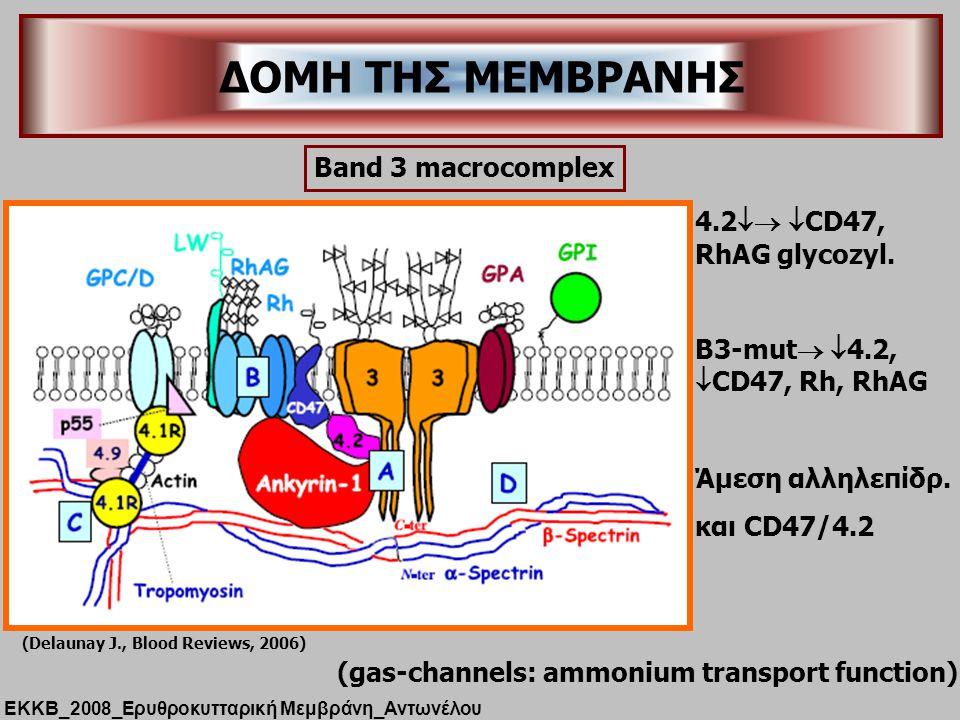 ΔΟΜΗ ΤΗΣ ΜΕΜΒΡΑΝΗΣ Band 3 macrocomplex 4.2 CD47, RhAG glycozyl.