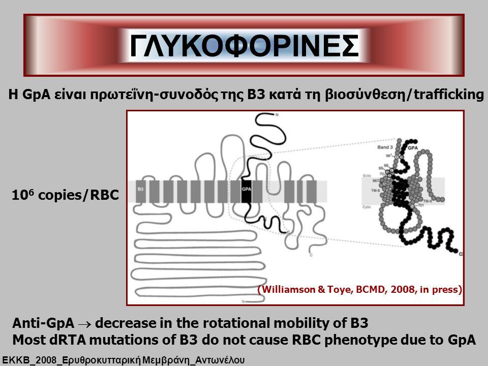 ΓΛΥΚΟΦΟΡΙΝΕΣ H GpA είναι πρωτεΐνη-συνοδός της B3 κατά τη βιοσύνθεση/trafficking. (Williamson & Toye, BCMD, 2008, in press)