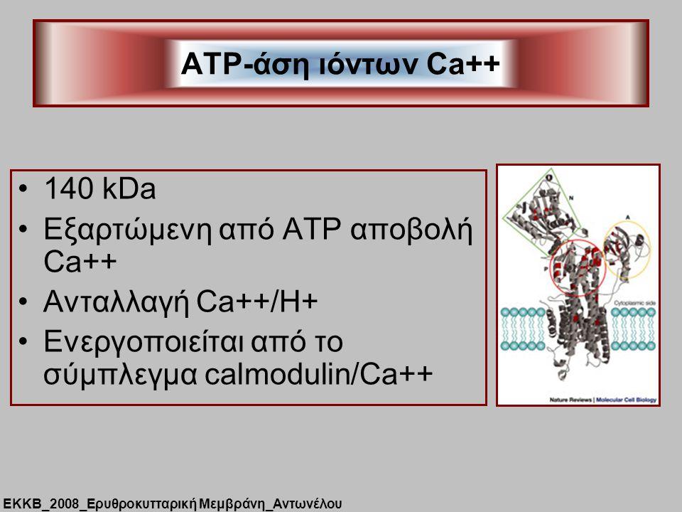 Εξαρτώμενη από ATP αποβολή Ca++ Ανταλλαγή Ca++/H+