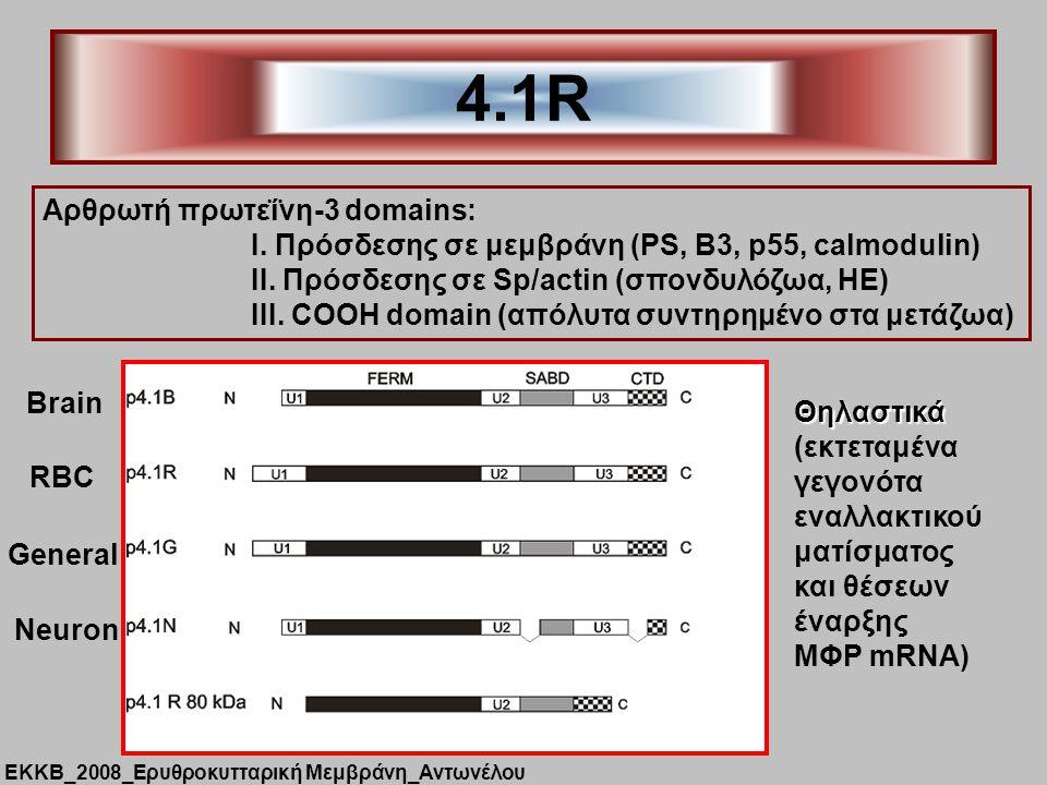 4.1R Aρθρωτή πρωτεΐνη-3 domains: