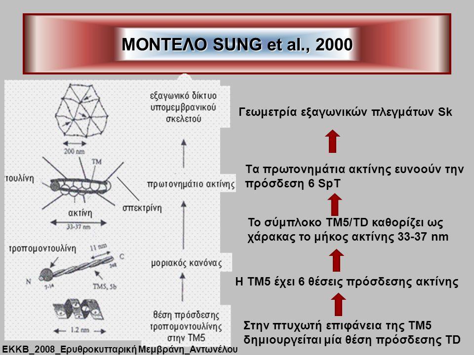ΜΟΝΤΕΛΟ SUNG et al., 2000 Γεωμετρία εξαγωνικών πλεγμάτων Sk