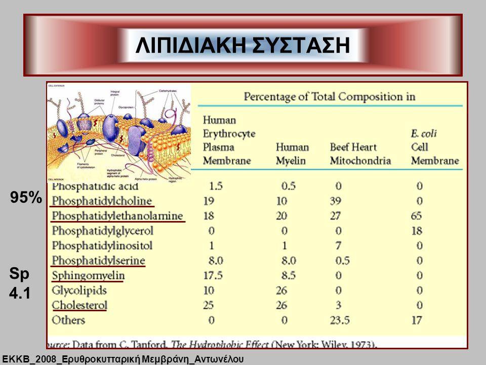 ΛΙΠΙΔΙΑΚΗ ΣΥΣΤΑΣΗ 95% Sp 4.1 ΕΚΚΒ_2008_Ερυθροκυτταρική Μεμβράνη_Αντωνέλου