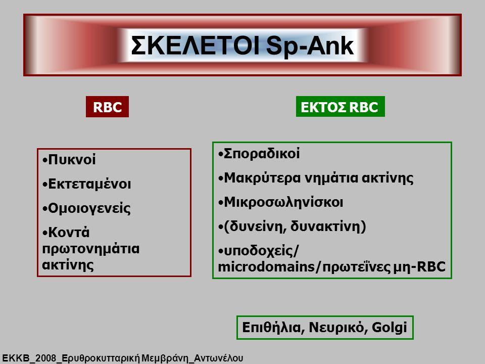 ΣΚΕΛΕΤΟΙ Sp-Ank RBC Πυκνοί Εκτεταμένοι Ομοιογενείς