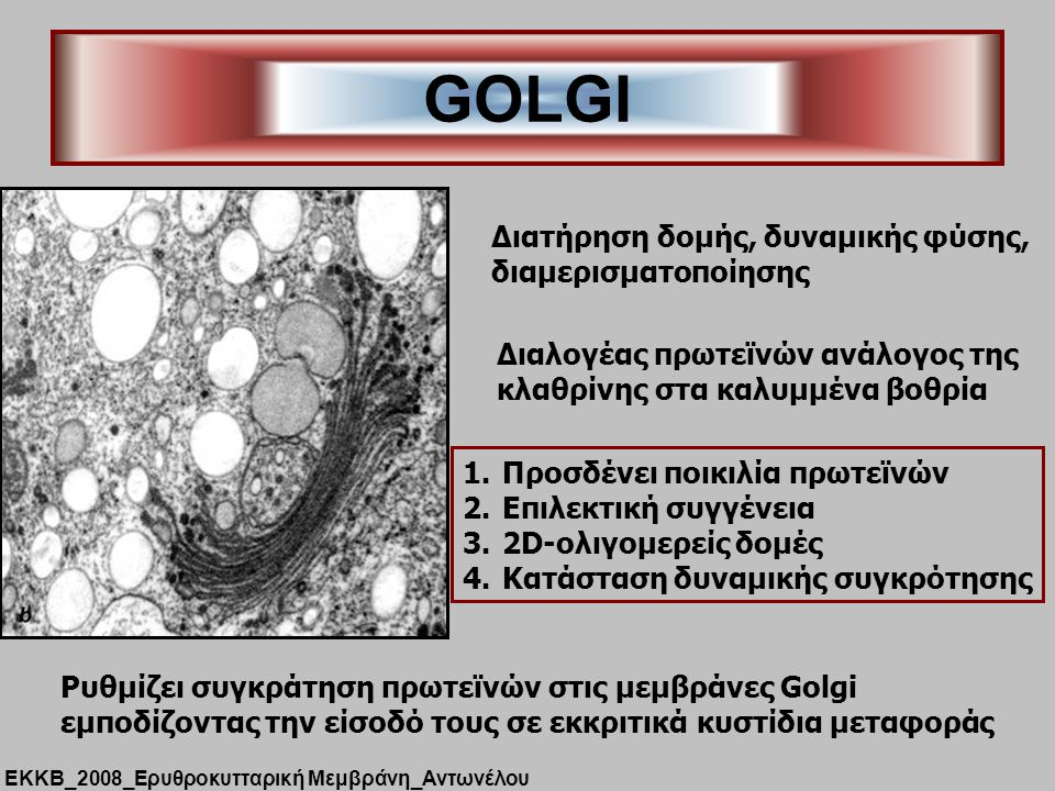 GOLGI Διατήρηση δομής, δυναμικής φύσης, διαμερισματοποίησης