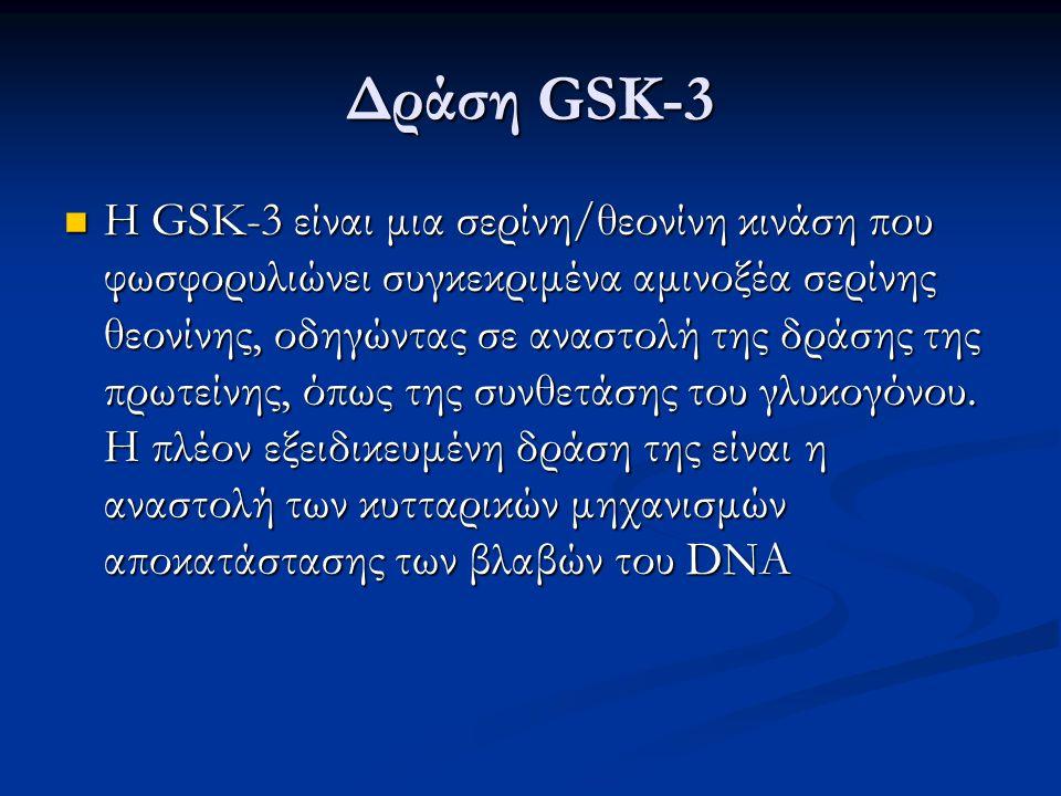 Δράση GSK-3