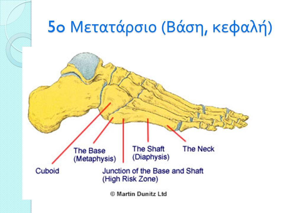 5o Μετατάρσιο (Βάση, κεφαλή)