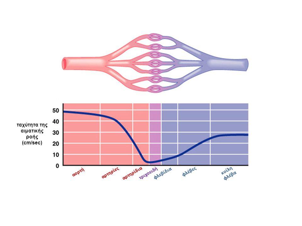 ταχύτητα της αιματικής ροής (cm/sec)
