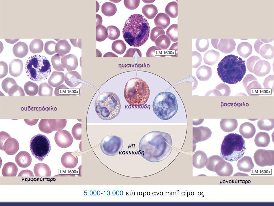 5.000-10.000 κύτταρα ανά mm3 αίματος