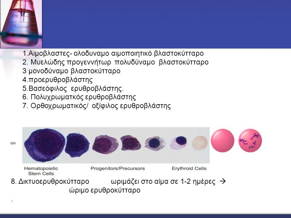 1.Αιμοβλαστες- ολοδυναμο αιμοποιητικό βλαστοκύτταρο