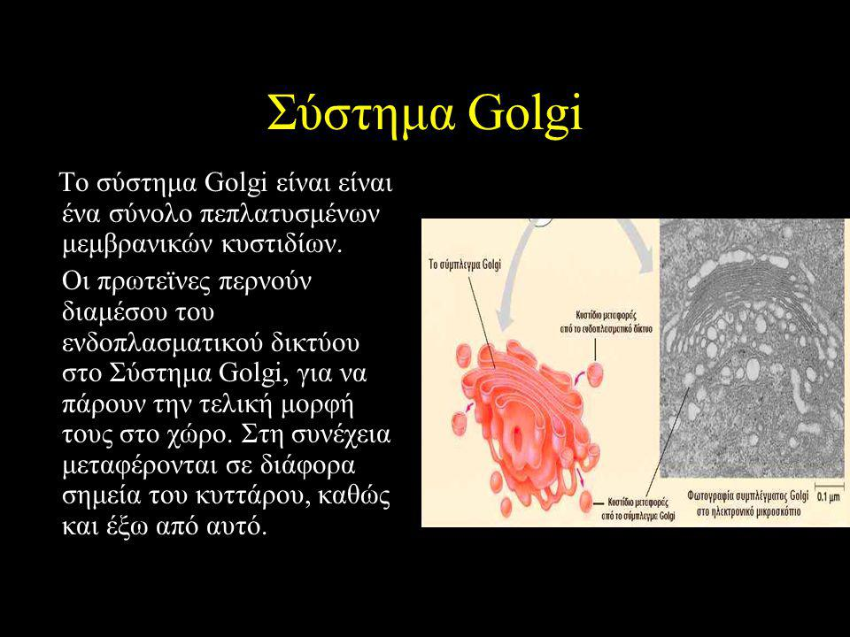 Σύστημα Golgi