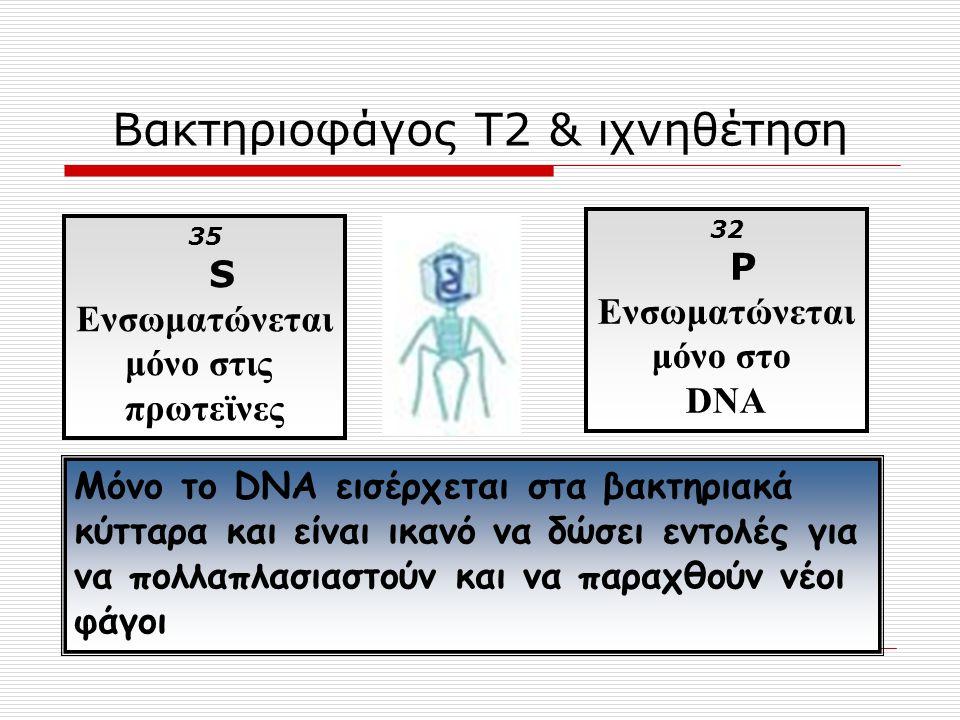 Βακτηριοφάγος Τ2 & ιχνηθέτηση
