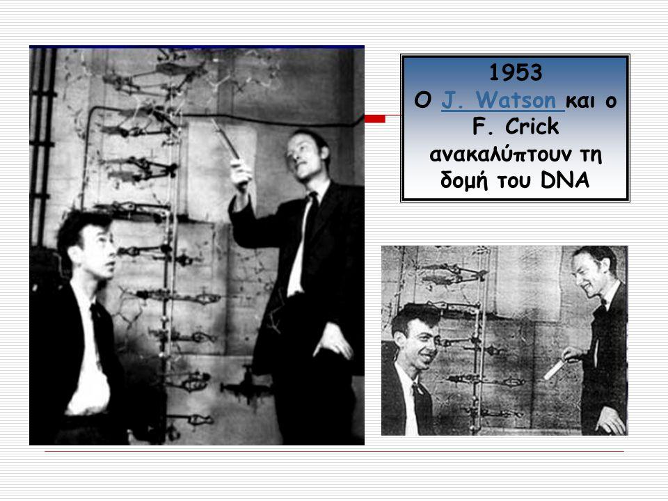 Ο J. Watson και ο F. Crick ανακαλύπτουν τη δομή του DNA