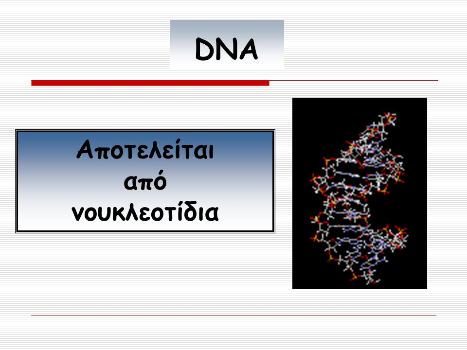 DNA Αποτελείται από νουκλεοτίδια