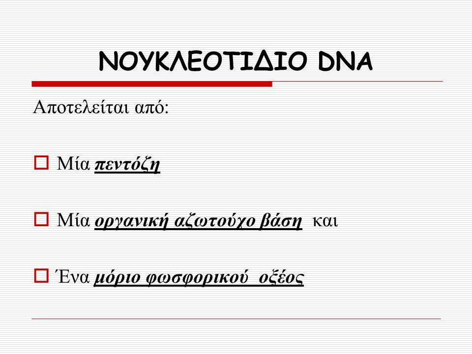 ΝΟΥΚΛΕΟΤΙΔΙΟ DNA Αποτελείται από: Μία πεντόζη