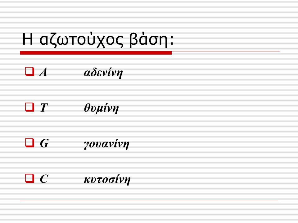 Η αζωτούχος βάση: Α αδενίνη Τ θυμίνη G γουανίνη C κυτοσίνη