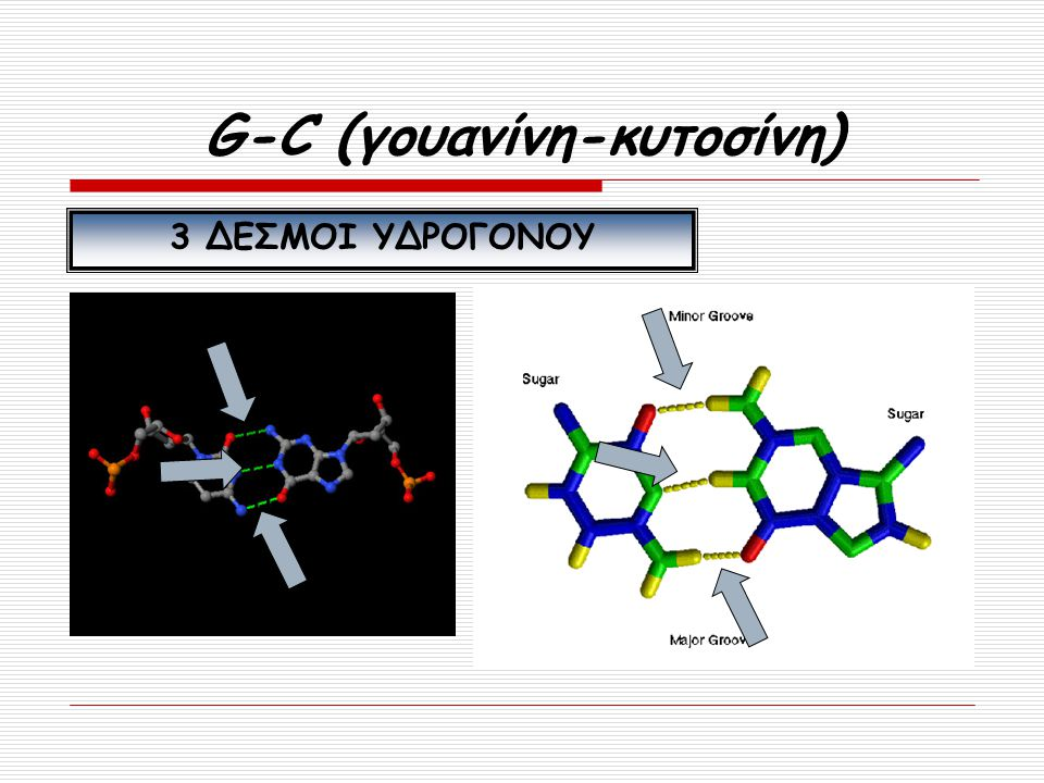 G-C (γουανίνη-κυτοσίνη)