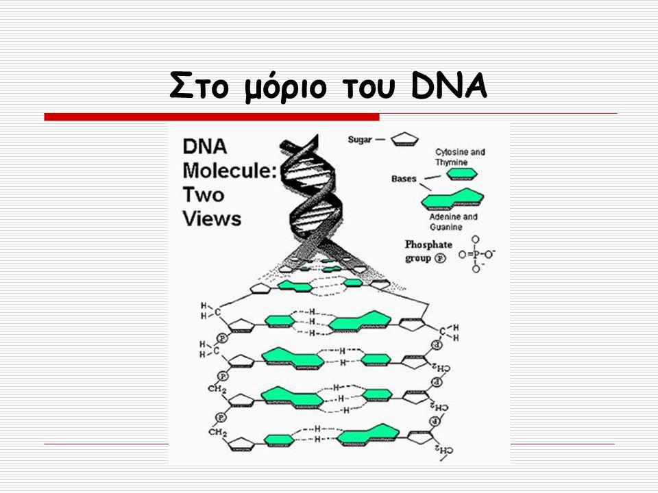 Στο μόριο του DNA