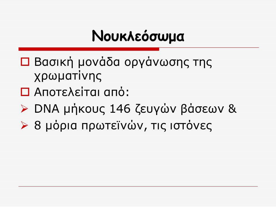 Νουκλεόσωμα Βασική μονάδα οργάνωσης της χρωματίνης Αποτελείται από: