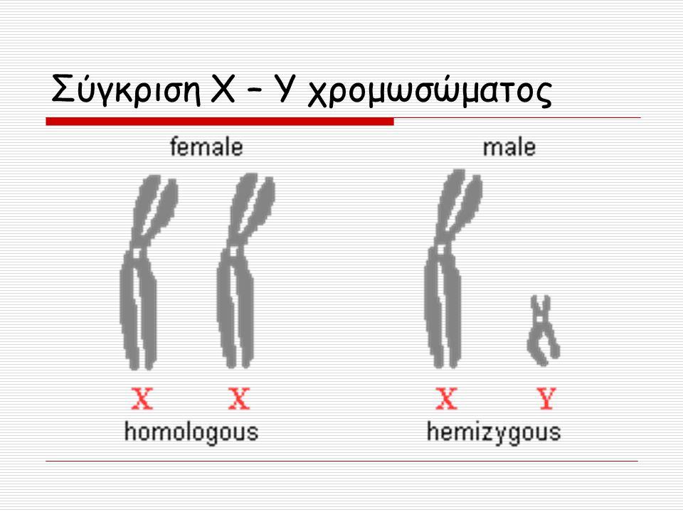 Σύγκριση Χ – Υ χρομωσώματος