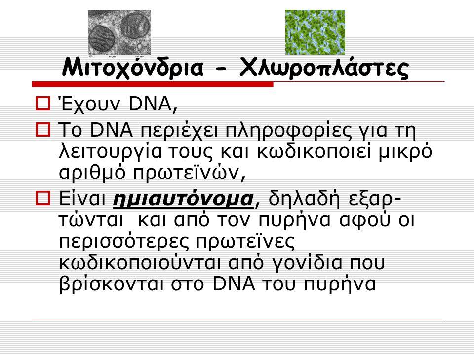 Μιτοχόνδρια - Χλωροπλάστες
