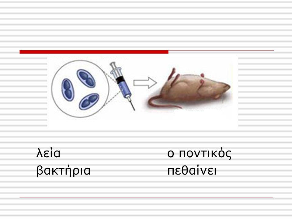 λεία ο ποντικός βακτήρια πεθαίνει