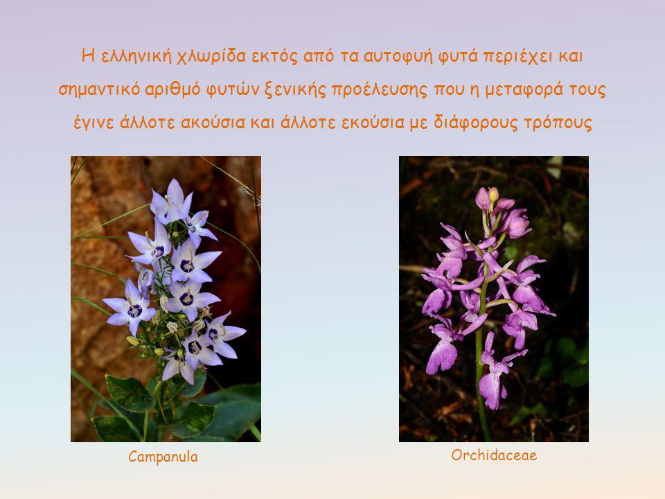 Η ελληνική χλωρίδα εκτός από τα αυτοφυή φυτά περιέχει και σημαντικό αριθμό φυτών ξενικής προέλευσης που η μεταφορά τους έγινε άλλοτε ακούσια και άλλοτε εκούσια με διάφορους τρόπους