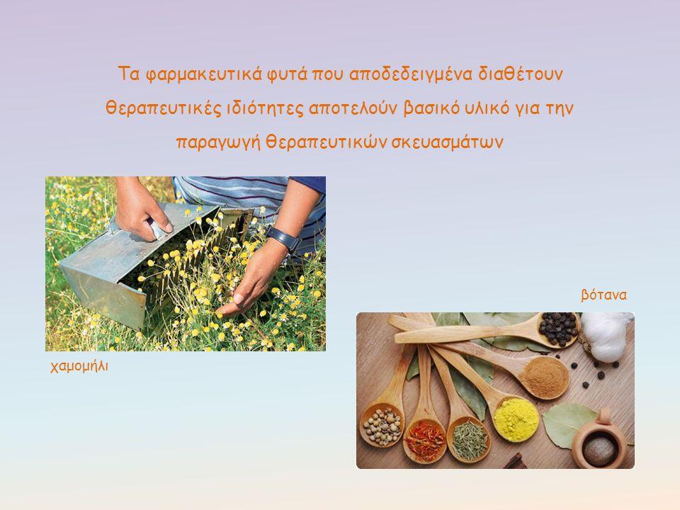 Τα φαρμακευτικά φυτά που αποδεδειγμένα διαθέτουν θεραπευτικές ιδιότητες αποτελούν βασικό υλικό για την παραγωγή θεραπευτικών σκευασμάτων