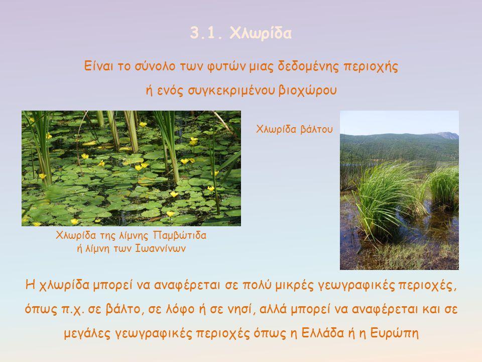 Χλωρίδα της λίμνης Παμβώτιδα
