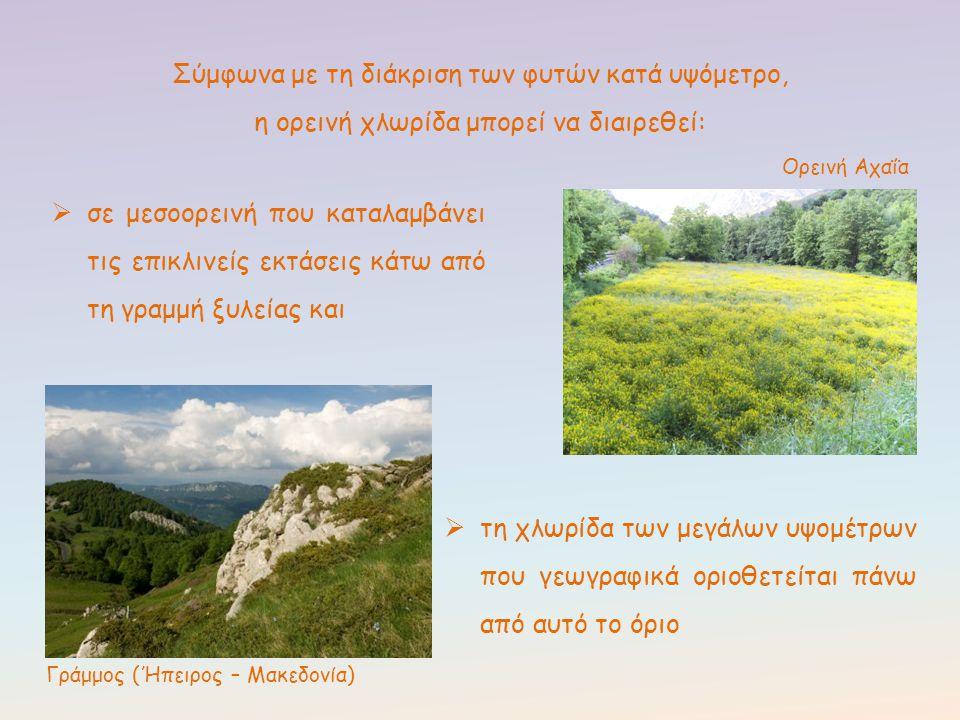 Γράμμος (Ήπειρος – Μακεδονία)