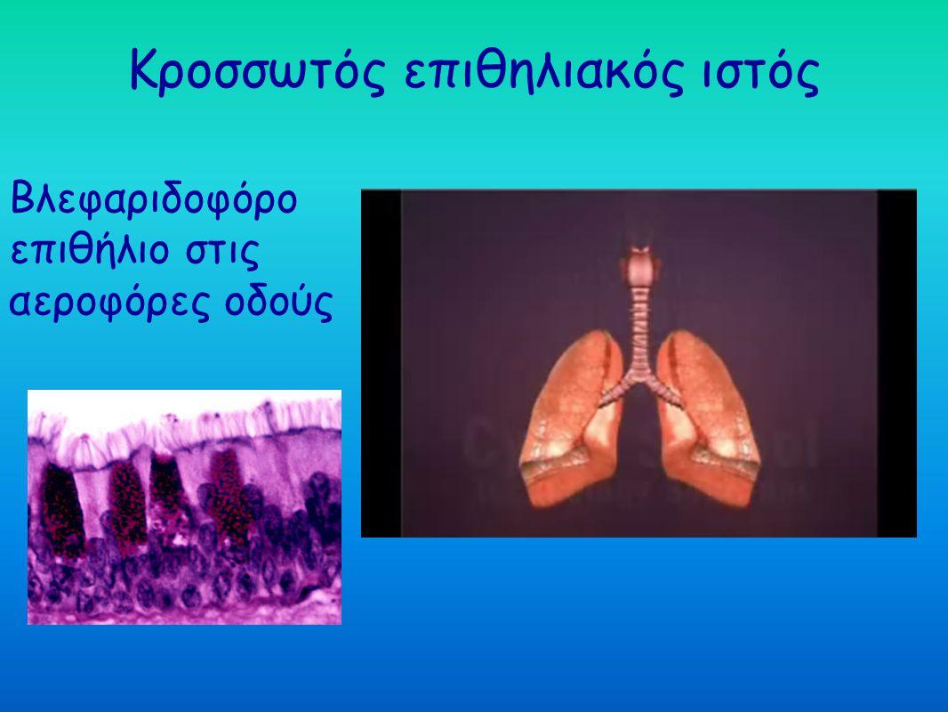Κροσσωτός επιθηλιακός ιστός