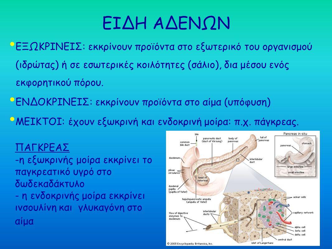ΕΙΔΗ ΑΔΕΝΩΝ