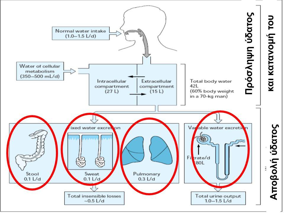 Πρόσληψη ύδατος και κατανομή του Αποβολή ύδατος