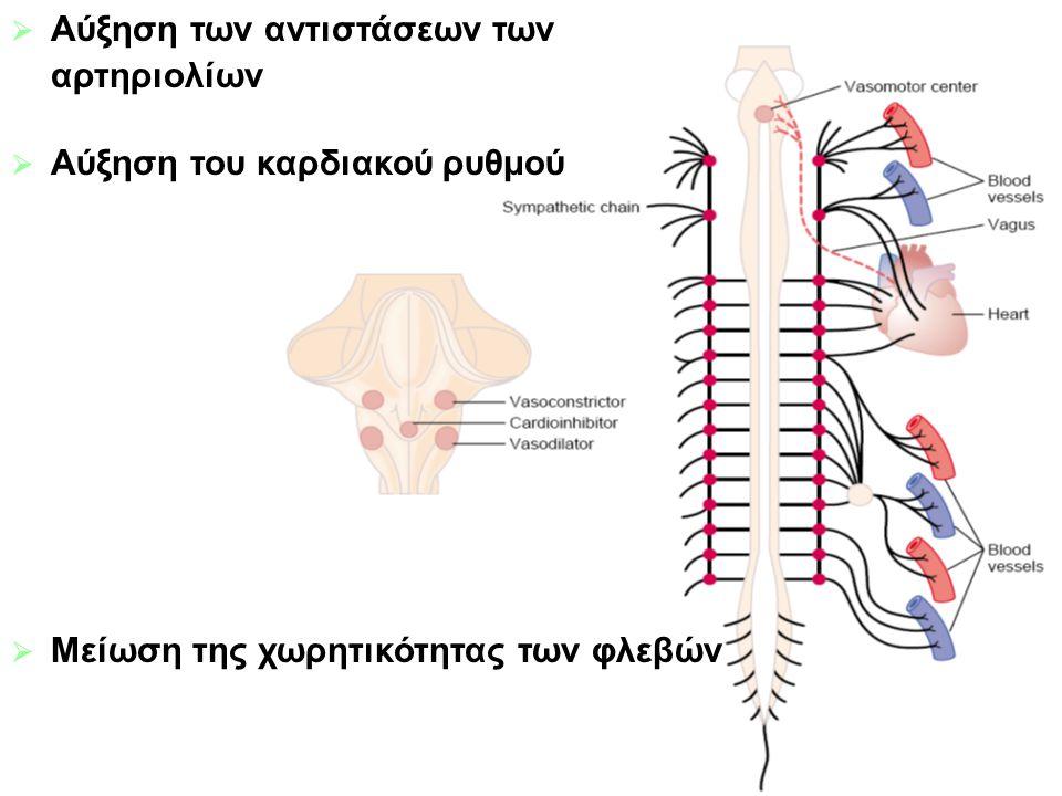 Αύξηση των αντιστάσεων των αρτηριολίων Αύξηση του καρδιακού ρυθμού