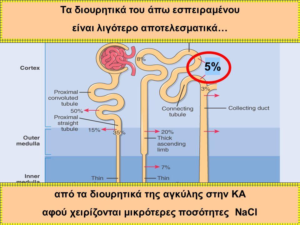 5% Τα διουρητικά του άπω εσπειραμένου είναι λιγότερο αποτελεσματικά…
