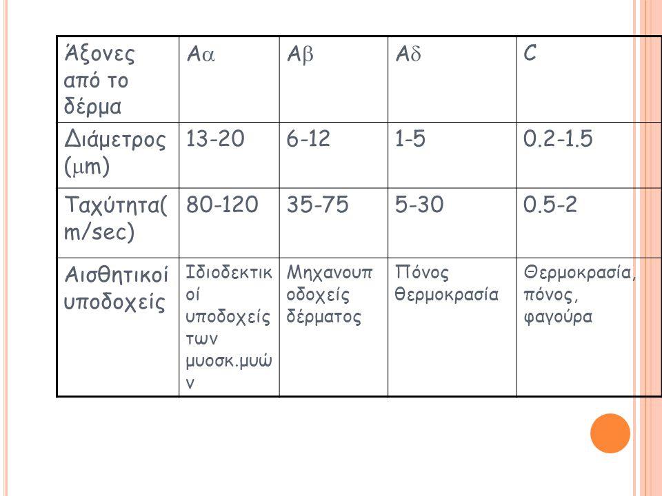 Άξονες από το δέρμα A A A C Διάμετρος (m) 13-20 6-12 1-5 0.2-1.5