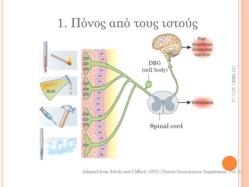 1. Πόνος από τους ιστούς Spinal cord DRG (cell body) UH NMS1 2011-12